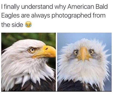 America Meme Eagle - 25 best ideas about bald eagle meme on pinterest bald