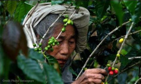 Jual Kopi Di Tingkat Petani by Kebangkitan Tanah Quot Surga Kopi Quot Penuh Nestapa