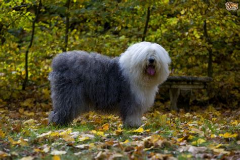 large haired dogs image gallery haired large