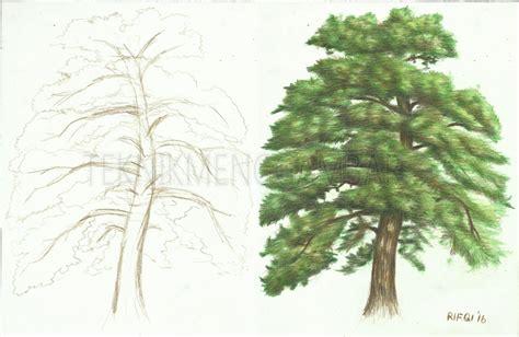 tutorial menggambar pohon cara menggambar pohon pinus dengan pensil warna teknik