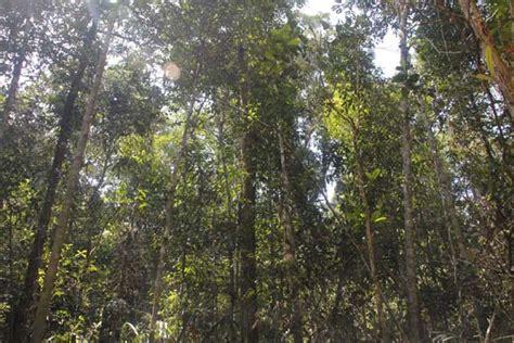 hutan desa segamai1 mongabay co id