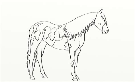 coloring pages of paint horses how to draw lineart