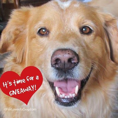 Dog Giveaways - talking dogs at for love of a dog giveaways