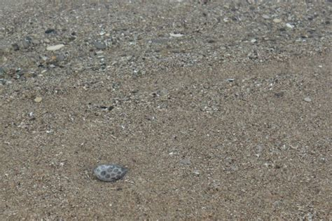 finding petoskey stones in michigan one of the many free