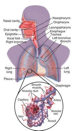 right meaning lung consolidation definition of lung consolidation by