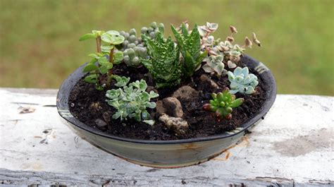 Succulent Dish Garden Ideas Potted Succulent Garden Www Pixshark Images Galleries With A Bite