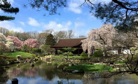shofuso japanese house and garden top spots to check out cherry blossoms during peak season in philly
