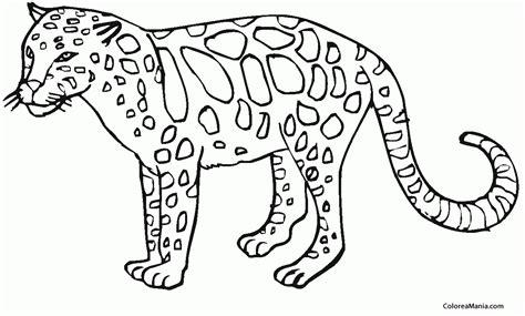 imagenes de jaguares para dibujar colorear soy un leopardo animales del bosque dibujo