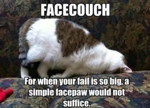 face couch facecouch cat meme cat planet cat planet