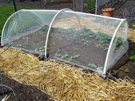 Vegetable Garden Netting S Kitchen Garden May 7 2011 This Week In The Garden