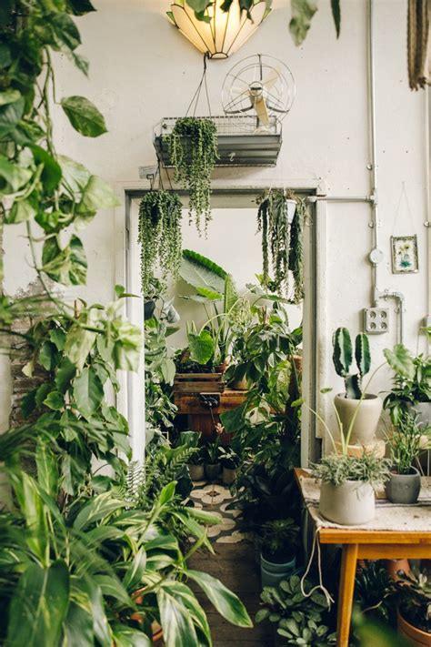 indoor plants for rooms 1000 ideas about greenhouses on aquaponics