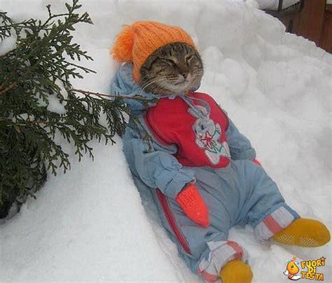 gatto delle nevi in the panchine pistenbully 600 alleghe un giro sul gatto delle nevi