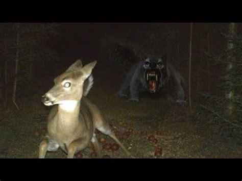 vampire squirrel that hunts deer youtube
