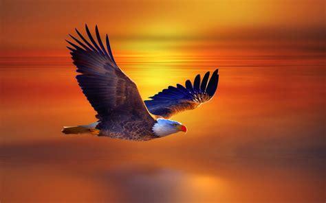 animals eagle wallpapers hd desktop  mobile backgrounds