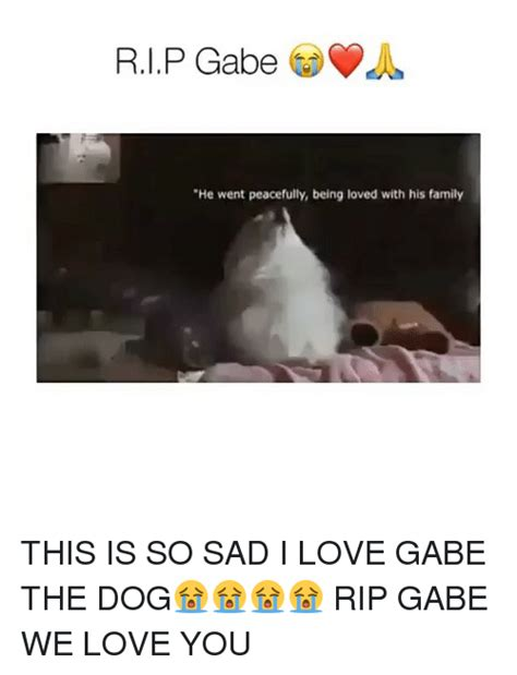 Sad Memes About Love - 25 best memes about gabe the dog gabe the dog memes