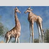 Colorful Leopard Print Pattern | 1440 x 1080 jpeg 907kB