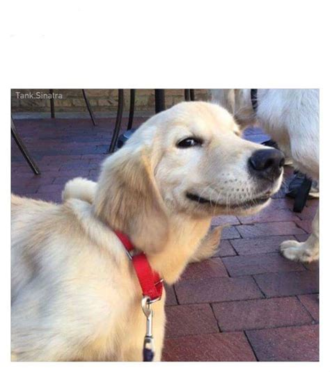 Dog Smiling Meme - smiling dog blank template imgflip