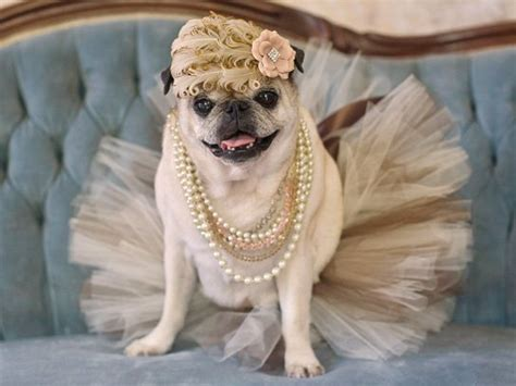 Pugs in Costume: Cute Ideas for Your Dog on Halloween