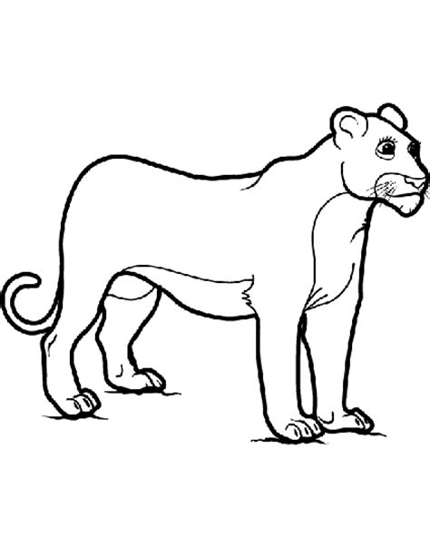 male lion coloring pages female lion coloring pages