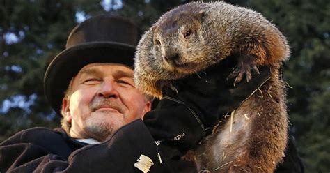 groundhog day usa today punxsutawney phil through the years