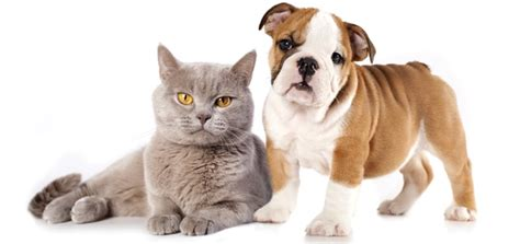 benefits of spaying a pet talk the benefits of spaying and neutering modern magazine