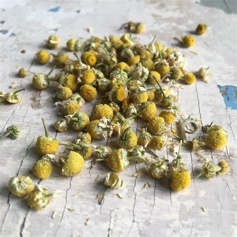 fiori camomilla camomilla fiori emporio delle spezie