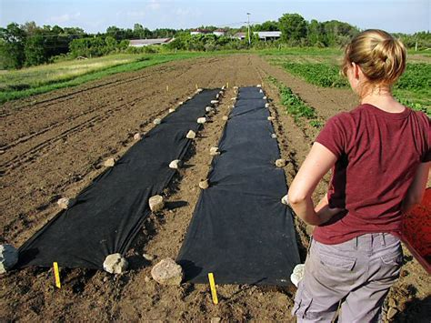 Landscape Fabric Garden Mulch Why Landscaping Fabric Is Bad For Your Garden Udawimowul