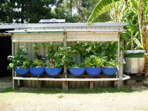 backyard aquaponics australia easy diy aquaponics system review
