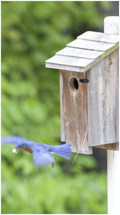 Backyard Birdhouse by Free Birdhouse Plans Bird Feeder And Bird Bath Building
