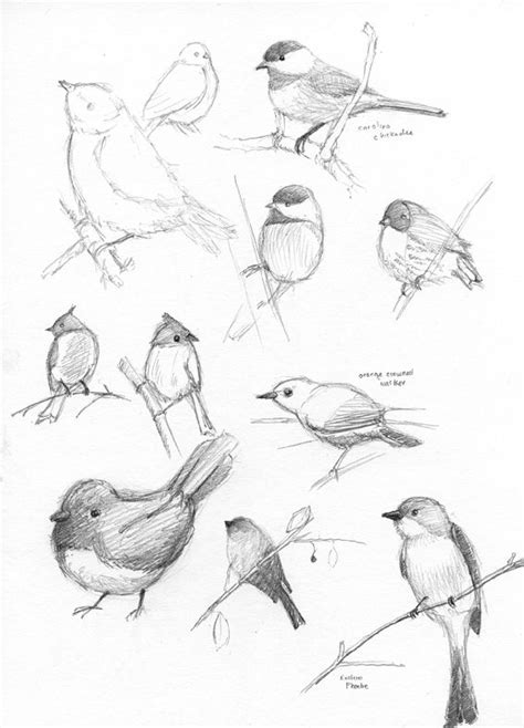 how to draw doodle birds these drawings birds