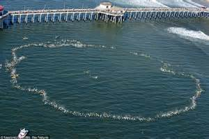huntington beach california surfing pictures