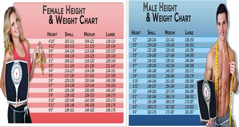 ideal picture height this is how much you should weigh according to your age