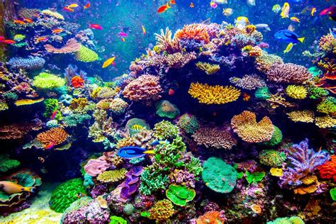 why did these colorful coral reefs shock scientists