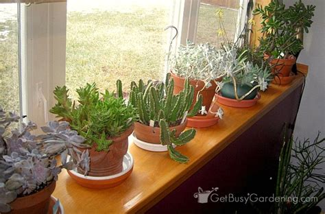 Indoor Plants Sunny Window Succulent Plant Care How To Take Care Of Succulents As