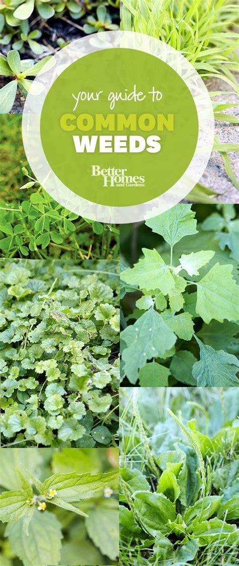 common garden vegetables 25 best ideas about types on marijuana