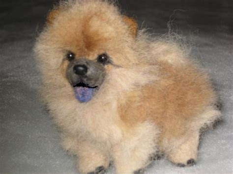chow chow pomeranian chow chow pomeranian mix www pixshark images galleries with a bite