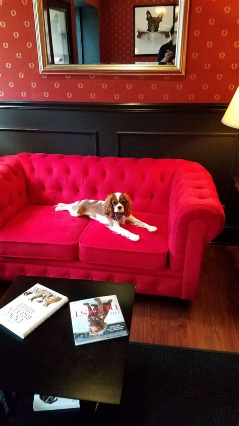 puppy lounge jersey city executive lounge daycare gallery
