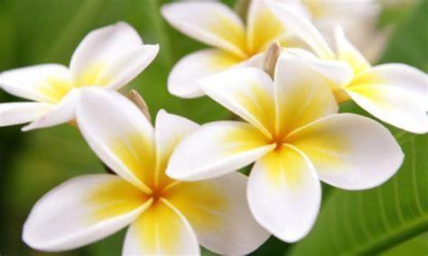 i fiori pi profumati i dieci fiori pi 249 profumati deabyday tv
