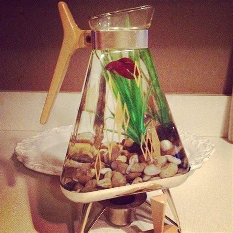 10 Best Images About Beta 35 best images about beta fish tank ideas on