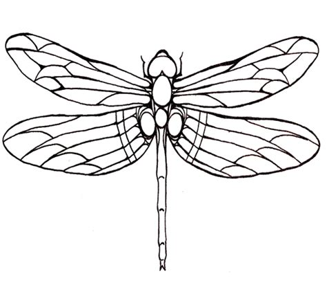 dragonfly large winged coloring page for kids patterns