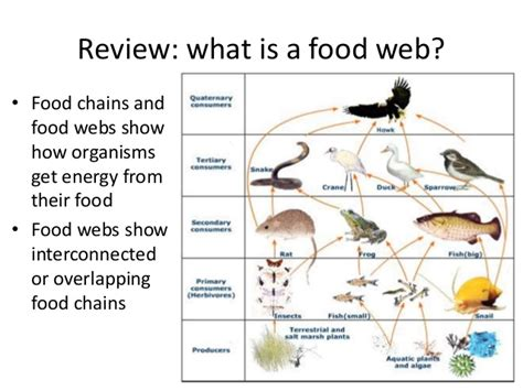 Forbes Names Their Web 25 List And Only 4 Of Them Are by Food Webs And Ecological Pyramids