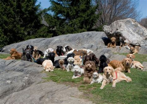 central park puppies central park goes to the dogs