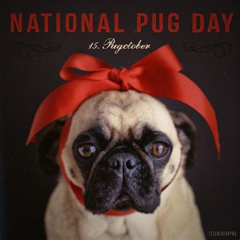 pug day 25 best ideas about national pug day on pug puppies baby pugs and black