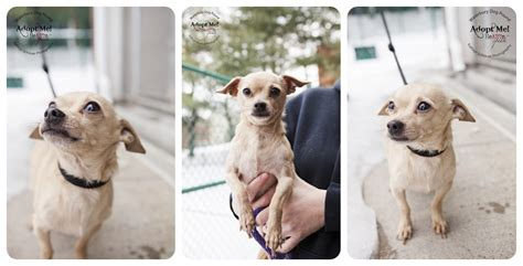 waterbury pound waterbury pound adoptable dogs kathryn schauer photography