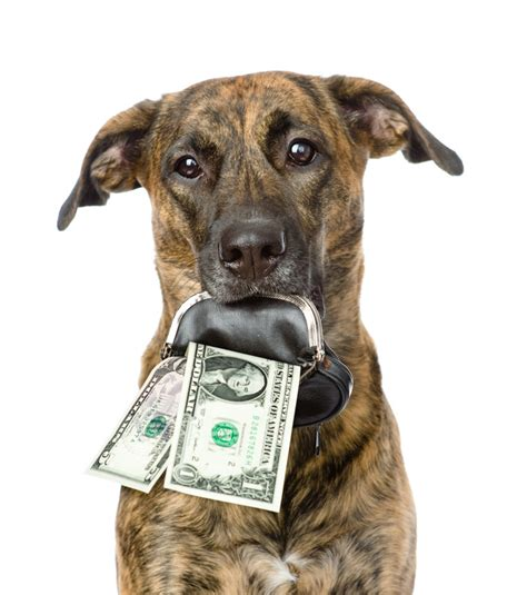 how much money is a puppy articles archives professional pet care in the millbrook ny area happy tails