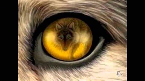 imagenes bonitos de niños em memoria aos lobos e lobas mais lindos youtube