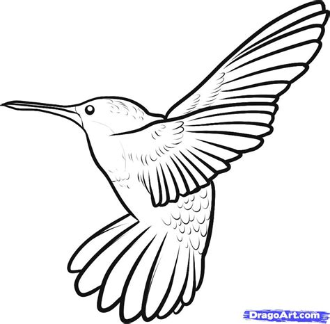 flying hummingbird drawing wallpapers gallery