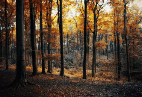Forest Room by October Forest Room By Bebefromtheblock On Deviantart