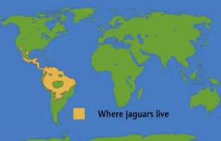 Where Can You Find Jaguars Jaguar Research Project M Kilgore Thinglink