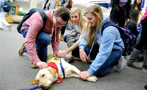 schools for service dogs students at vernon high school help service dogs vernon review